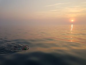 Channel swim sunrise